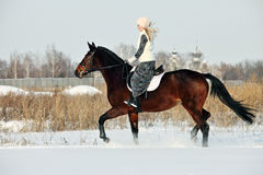 Equestrian riding horse on a field in winter, in the background a winter countryside Stock Photography