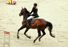Equestrian riding horse on a sports training Stock Photography