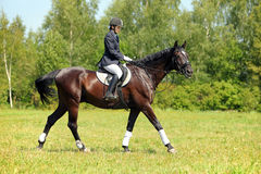 Equestrian riding horse on a sunny day Stock Image