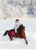 Equestrian riding horse in winter woods Royalty Free Stock Photography
