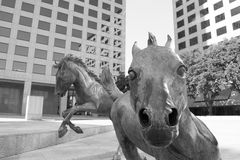 Equestrian sculpture in modern urban office building park. Sculpture of wild mustang horses in William Square, Irving TX Stock Photo