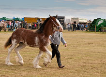 Equestrian show Stock Photography