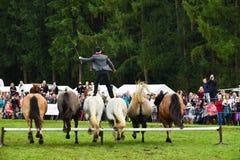 Equestrian Show Stock Image