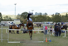 Equestrian show horse & rider jumping bar of hurdle on obstacle course Royalty Free Stock Images