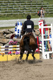 Equestrian show - horse stop at hurdle Royalty Free Stock Image