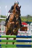 Equestrian Show Jumping Stock Photography