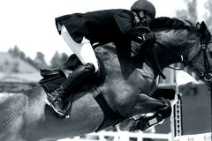 Equestrian Show Jumping Close-up (BW). Tight close-up of a horse & rider showjumping in an equestrian event (shallow focus, high contrast black and white stock photo