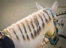 Equestrian Show Jumping Close-up horse Royalty Free Stock Photography