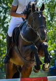 Equestrian Show Jumping Close-up horse rider in jodhpurs. Boy riding horse in equestrian event at horse riding competition, Arad, Romania Royalty Free Stock Images
