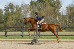 Equestrian Showing Warmbood Jumping - Side. Equestrian Showing Warmblood gelding - Jumping over vertical flower box- Side view Royalty Free Stock Photos