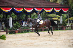 Equestrian Showjumping 3Q Classic Royalty Free Stock Photos