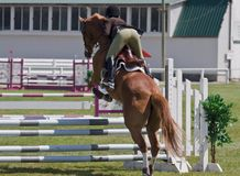 Equestrian showjumping horse Stock Photo