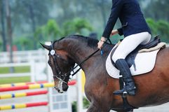 Equestrian showjumping. Horse and rider in showjumping competition Stock Image