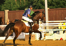 equestrian sport Obraz Royalty Free