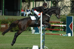 Equestrian sport. A female caucasian horse rider riding and jumping a hurdle with her beautiful brown sport horse at the riding school outdoors competing in an Royalty Free Stock Images