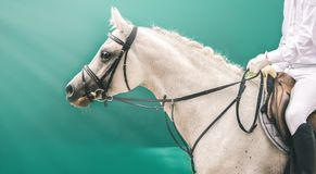 Horse and rider in white uniform at show jumping competition. Royalty Free Stock Images