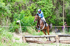 Equestrian sport. Stock Photography