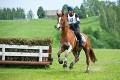 Equestrian sport. Cross-country. Rider on horse Stock Images