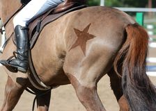 Equestrian sport in details. Back of the sports horse with with a beautiful. Equestrian sport in details. Back of the red sports horse with with a beautiful stock photography
