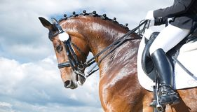 Equestrian sport - dressage head of sorrel horse. On sky nature background royalty free stock photo