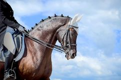 Equestrian sport - dressage head of sorrel horse. On sky nature background royalty free stock photos