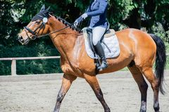 Equestrian sport dressage riding on a dressage course royalty free stock image