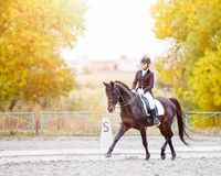 Equestrian sport event at fall with copy space Stock Image