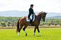 Equestrian sport. Female dressage rider. ARSENEV, RUSSIA - SEPTEMBER 03:  Unidentified female dressage rider on Riding show The Cup of the Governor of the Royalty Free Stock Photos
