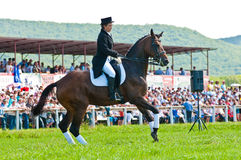 Equestrian sport. Female dressage rider. ARSENEV, RUSSIA - SEPTEMBER 03:  Unidentified female dressage rider on Riding show The Cup of the Governor of the Royalty Free Stock Image
