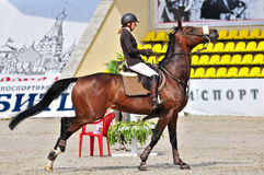 Equestrian sport. Female show jump rider. Royalty Free Stock Photo