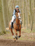 Equestrian sport,galloping horse Stock Photo