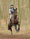 Equestrian sport,galloping horse Royalty Free Stock Image