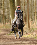 Equestrian sport,galloping horse Royalty Free Stock Photo