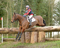 Equestrian sport: horse jumping Royalty Free Stock Images