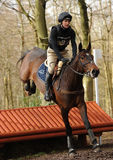 Equestrian sport: horse jumping Stock Photography
