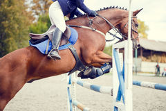 Equestrian sport image. Show jumping competition Royalty Free Stock Photography