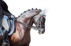 Equestrian sport portrait - dressage head of sorrel horse. Isolate on white background stock photos
