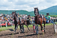 Equestrian sport. Trotters race in arena Royalty Free Stock Photography