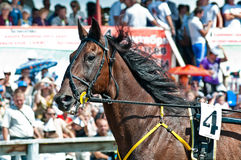 Equestrian sport. Trotters race in arena Stock Images