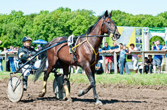 Equestrian sport. Trotters race in arena Stock Photo