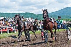 Equestrian sport. W arenie kłusak rasa Fotografia Royalty Free