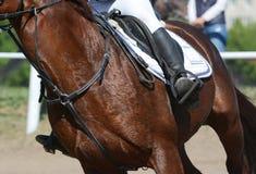 Equestrian sport w szczegółach Sporta jeździec na cwale i koń zdjęcie royalty free