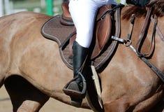 Equestrian sport w szczegółach Sporta jeździec na cwale i koń obrazy royalty free