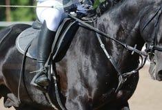 Equestrian sport w szczegółach Sporta jeździec na cwale i koń fotografia royalty free