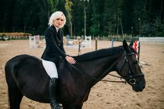 Equestrian sport, woman poses on horseback. Brown stallion, leisure with animal, riding on horse Royalty Free Stock Photos