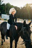 Equestrian sport, woman poses on horseback. Brown stallion, leisure with animal, riding on horse Stock Image