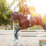 Equestrian sporta wizerunek Przedstawienia doskakiwania rywalizacja Obraz Royalty Free