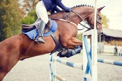 Equestrian sporta wizerunek Przedstawienia doskakiwania rywalizacja Fotografia Royalty Free