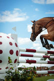 Equestrian SPorts Stock Photo