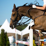 Equestrian Sports Royalty Free Stock Image
